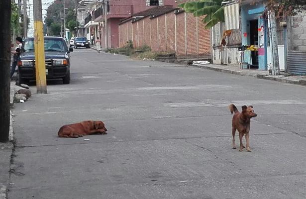 Sobrepoblación en el Centro de Bienestar Animal de Córdoba