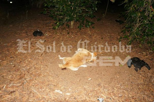 Envenenamiento masivo de perros y zopilotes en Huatusco