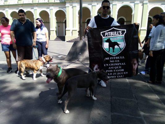 Piden no estigmatizar a razas de perros peligrosos; sólo responden al trato que les dan