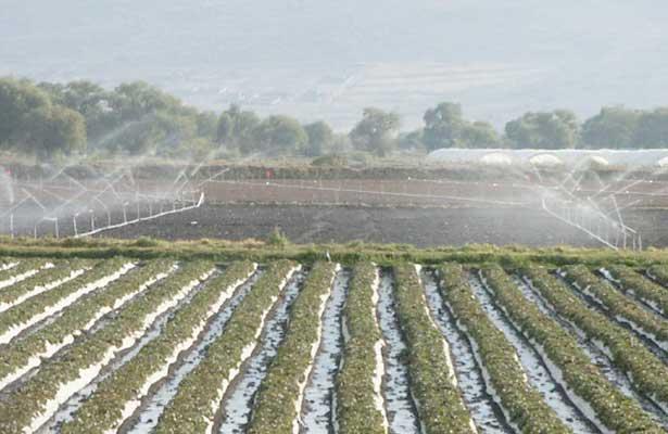 Monsanto aumentará 25% la eficiencia del uso del agua