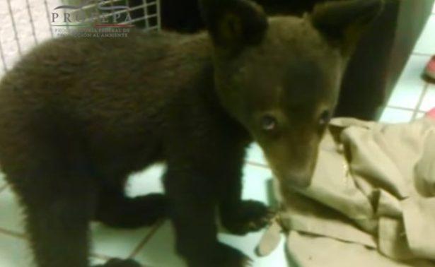 """Buscan """"casita""""para cachorro de oso negro"""