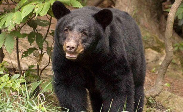 Atentado contra la vida silvestre de Los Tohono O'odham