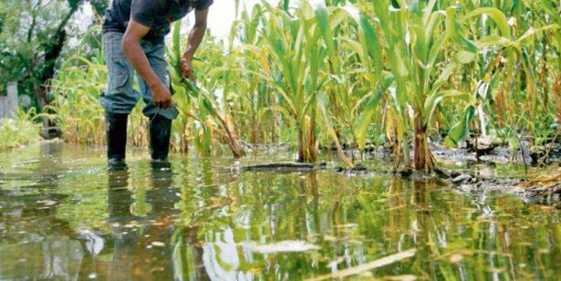 Protegerán cultivos contra temporal