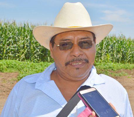 Esperan repunte del 50% en producción agrícola