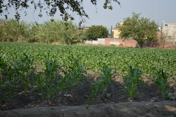 Van 4.2 mdp al sector agropecuario