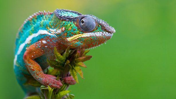 Denuncian venta ilegal de animales en peligro de extinción