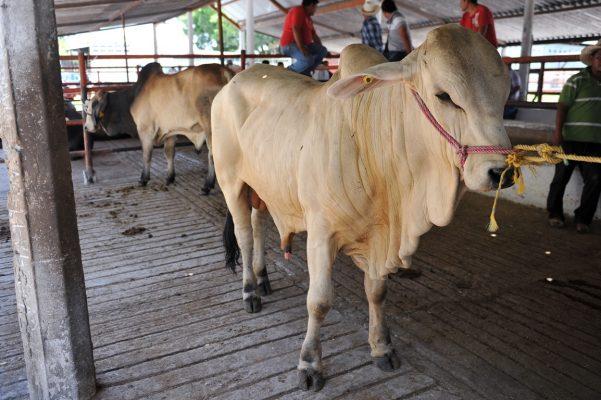 Temen ganaderos afectación con TLC