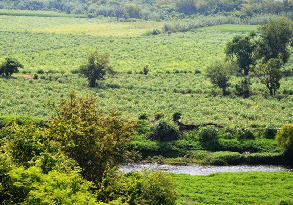 CASI LA totalidad del territorio de Morelos está a salvo de sequías.