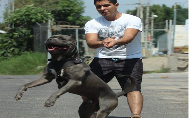 Perros atacan cuando sufren maltrato o abandono