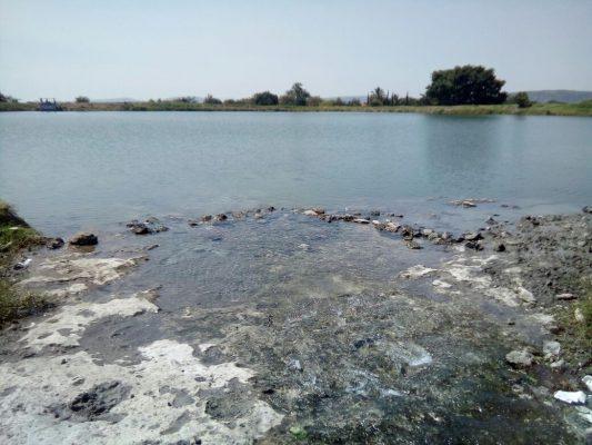 Contaminan aguas negras a mojarras tilapia en Apatlaco