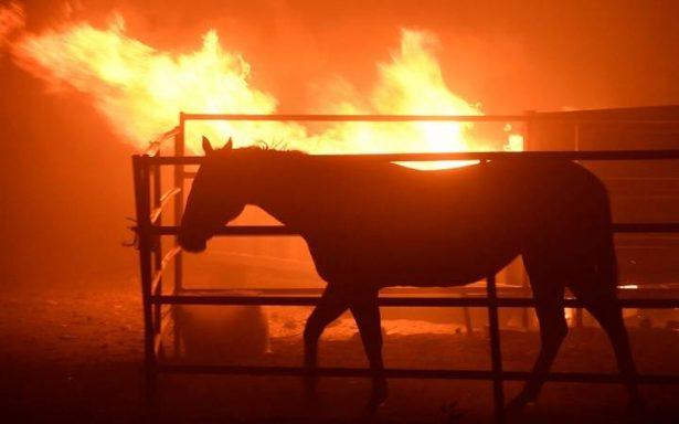 Consume el fuego 150 edificios en California