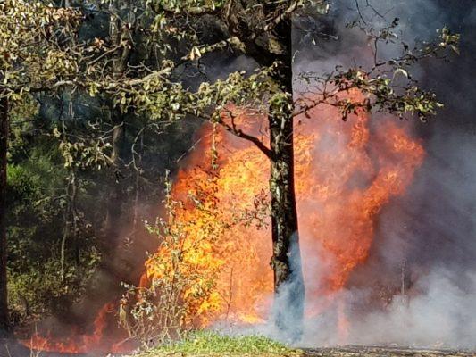 Aumentan incendios forestales por el frío