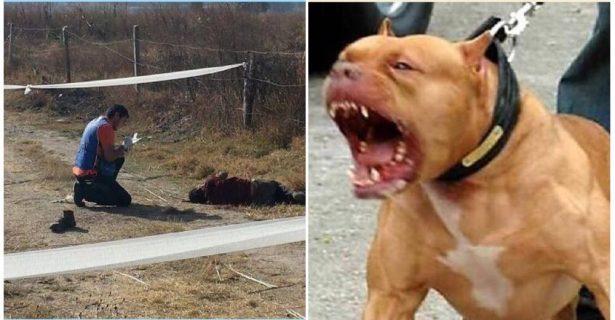 Jauría de perros hambrientos se comen a hombre