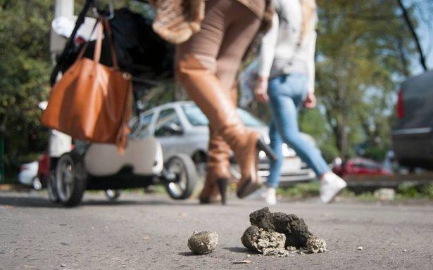 Capitalinos respiran media tonelada de heces fecales al año