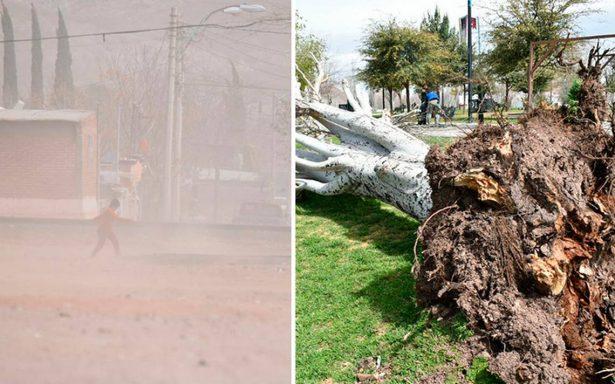 Árboles y bardas caídas: fuertes ventarrones sorprenden a chihuahuenses