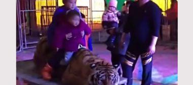 Inmovilizan en circo a un Tigre para tomarse fotos