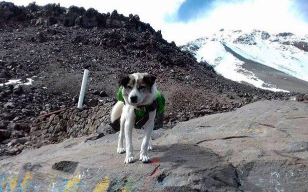 """""""Citla"""", el perro guardián del Pico de Orizaba, lucha por su vida"""
