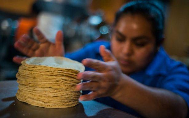 Injustificado, aumento en precio de tortilla: productores de maíz