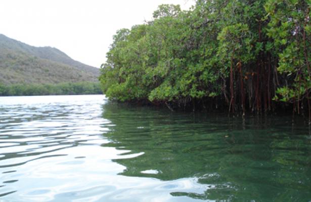 Parque Cancún conservará manglar