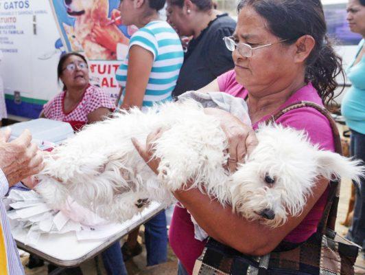 Va municipio contra perros y gatos callejeros