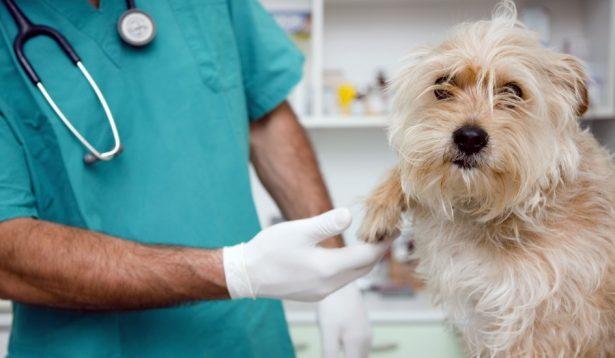 En atención médica, canes de Tepoztlán