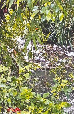 Generan inundaciones tapones de basura