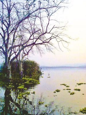 Avanza proyecto de aviturismo en la Laguna de Coatetelco