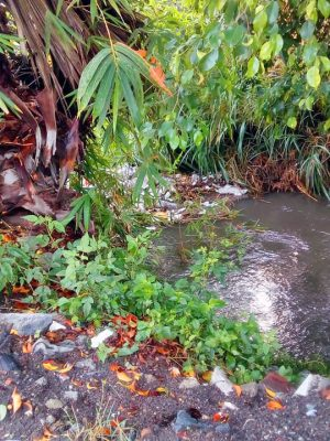 Habitantes de la parte alta del canal arrojan grandes cantidades de basura.