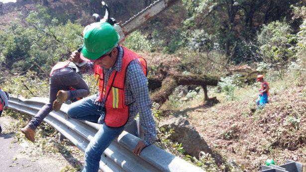 Llevarán a Cabildo la tala de árboles