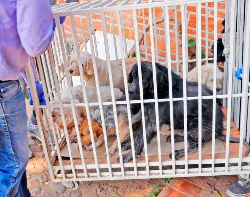 Así estaban los perros en casa de Dora Anaya