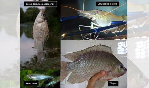 Sismo ocasiona el escape de especies acuáticas invasoras en Morelos