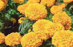 Tetela del Monte se pinta naranja