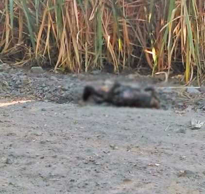 El cuerpo calcinado se encontraba en campos de riego.