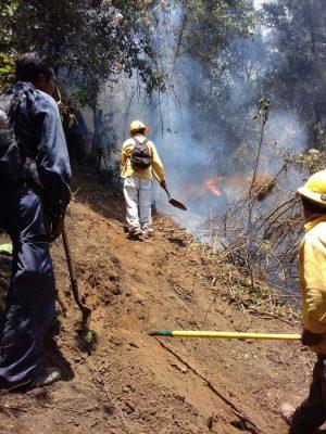 Sofocan incendio forestal en Tepoz