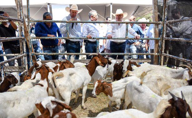 Reactivan la ganadería en la zona sur poniente