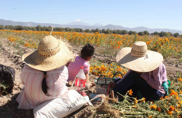 Abandonan jóvenes poblanos trabajo en el campo