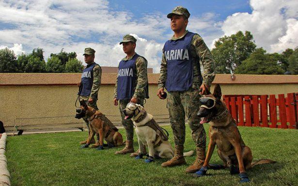 Ángeles caninos, los símbolos de la esperanza en el 19S
