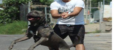Perros atacan cuando sufren maltraro o abandono