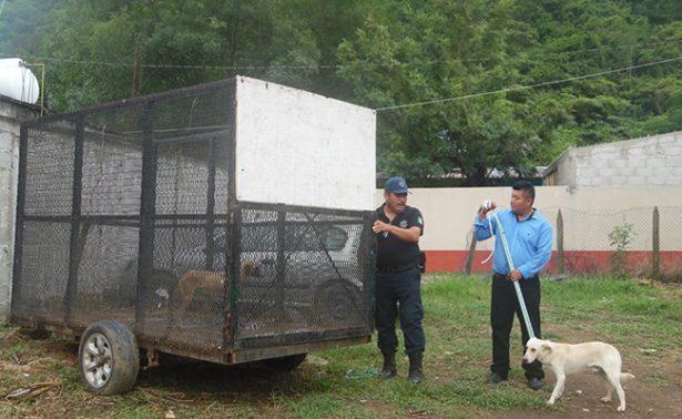Capturan jauría en Hidalgo