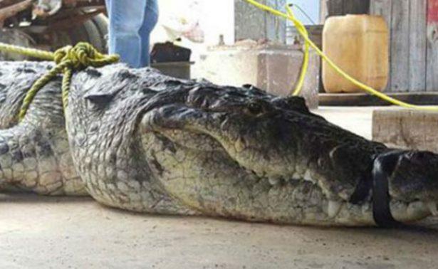 Atrapan a cocodrilo en Ciudad Madero, Tamaulipas