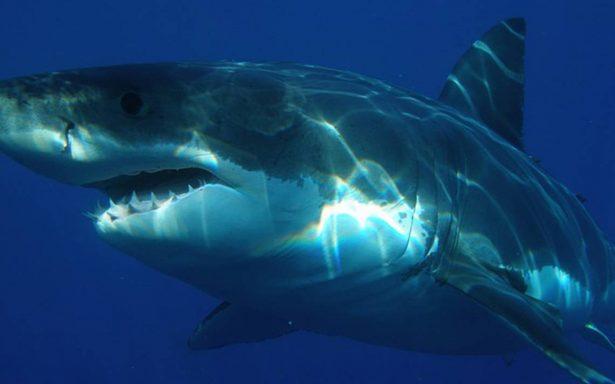 Tiburón ataca a joven y lo mata a la orilla de un playa en Cuba
