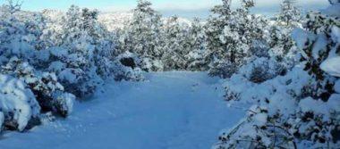 Chihuahua se pinta de blanco por intensas nevadas