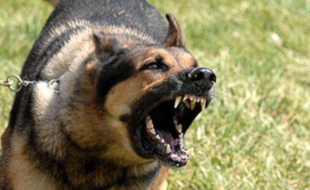 Perros aprovechan descuido y muerden a una mujer hasta la muerte