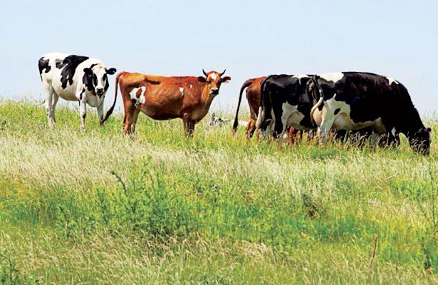 Confisca la Fiscalía 360 cabezas de ganado en S.J. de Gracia