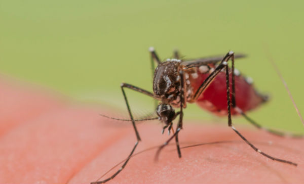Confirman que no existe ningún caso de dengue en La Laguna