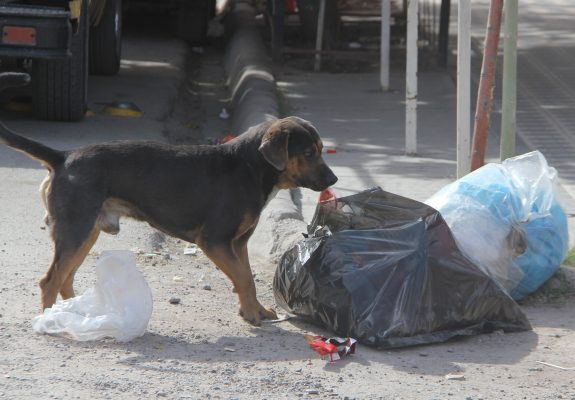 Ha atendido la SS a 1,174 personas agredidas por perros