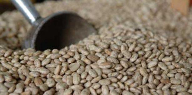 De $2.25, incentivoa los productoresde frijol: CNC