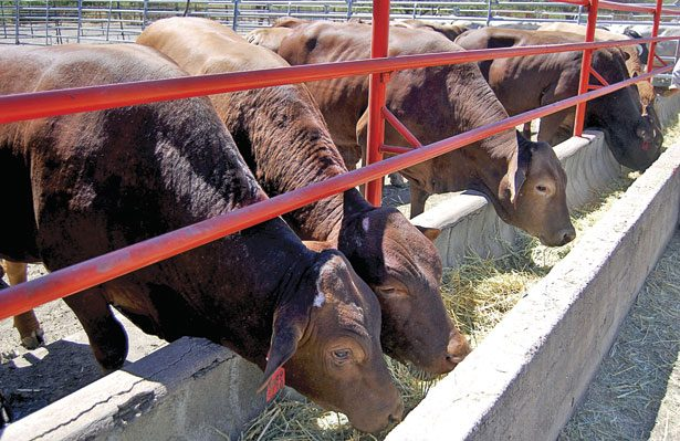 Durango, de los estados que más invierten a sanidad animal