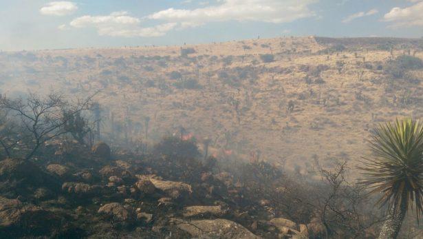 Incendio consume 45 hectáreas de pastizal cerca de La Tinaja