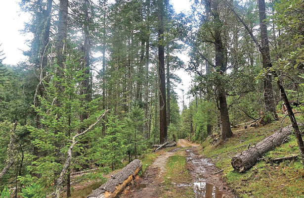 Inseguridad impide desarrollo deproyectos para el bosque: RBA